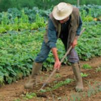 L'agriculture biodynamique et la marque collective Demeter