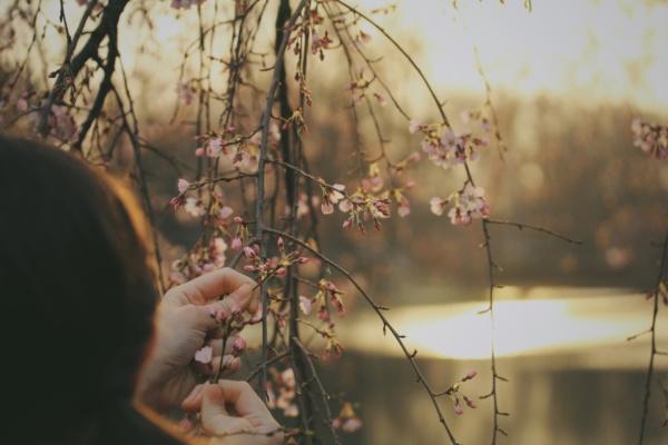 cueillette de fleurs sur un arbre
