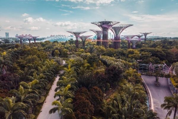 végétalisation d'une ville