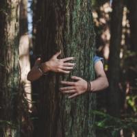 Les bénéfices santé de la forêt de pins