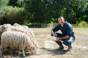 Un paysan et ses moutons